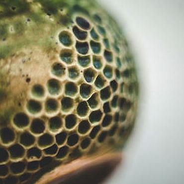Посуда ручной работы. Ярмарка Мастеров - ручная работа Чашка про ящериц и крокодилов. Handmade.