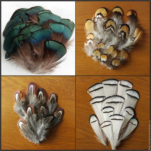 Другие виды рукоделия ручной работы. Ярмарка Мастеров - ручная работа. Купить Перо фазана. Handmade. Зеленый, перо фазана