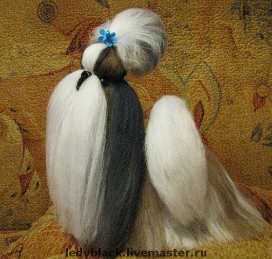 Собачка породы ши-тцу