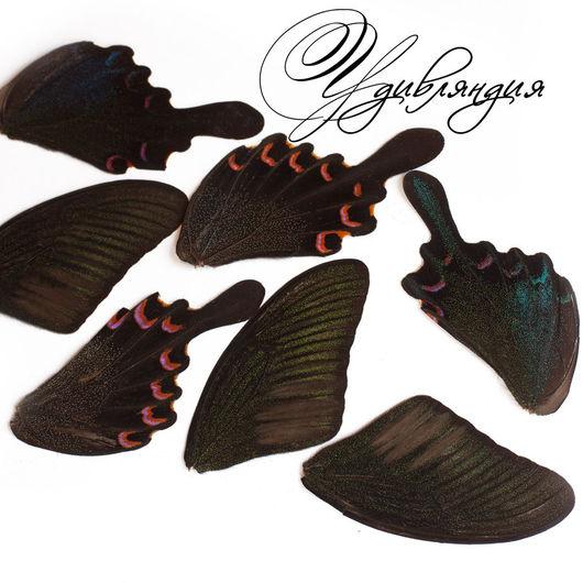 Другие виды рукоделия ручной работы. Ярмарка Мастеров - ручная работа. Купить Крыло бабочки натуральное №6.. Handmade. Крылья
