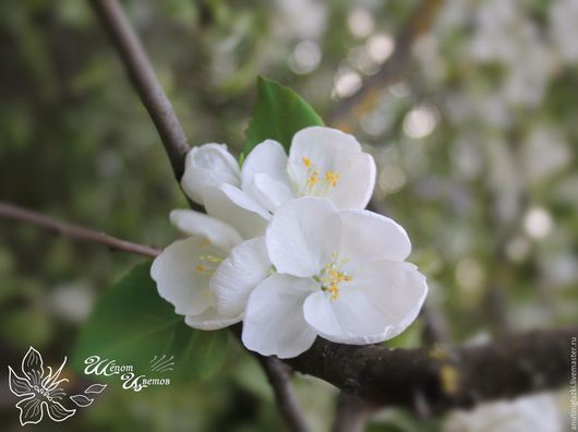 Цветы ручной работы. Ярмарка Мастеров - ручная работа. Купить Брошь из цветов яблони. Handmade. Белый, цветы яблони