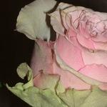 Наталья Остролуцкая (Favourite-doll) - Ярмарка Мастеров - ручная работа, handmade