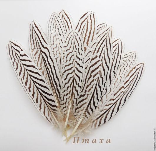 Другие виды рукоделия ручной работы. Ярмарка Мастеров - ручная работа. Купить Перья серебряного фазана. Handmade. Чёрно-белый