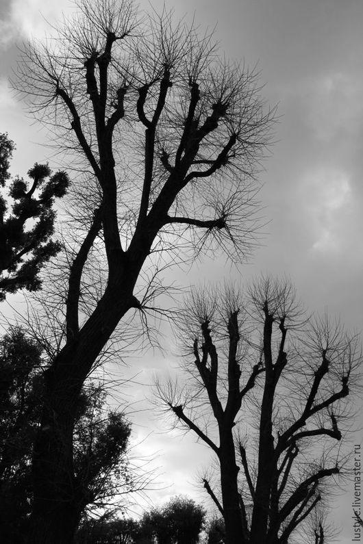 LuStyle. Авторская фоторабота `Деревья...` Флооренция, 2014 г. Стильное черно-белое фото - для украшения интерьера.