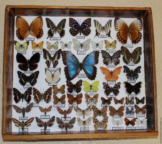 Комплекты аксессуаров ручной работы. Ярмарка Мастеров - ручная работа. Купить Коллекция бабочек (тропические и европейские виды). Handmade. Комбинированный
