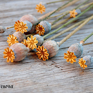 Цветы и флористика. Ярмарка Мастеров - ручная работа Цветы: Сухоцветы мак коробочки. Handmade.