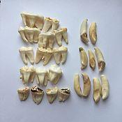 Оберег ручной работы. Ярмарка Мастеров - ручная работа Зубы медведя. Handmade.