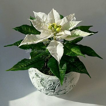 Flowers and floristry handmade. Livemaster - original item Poinsettia from cold porcelain. Handmade.