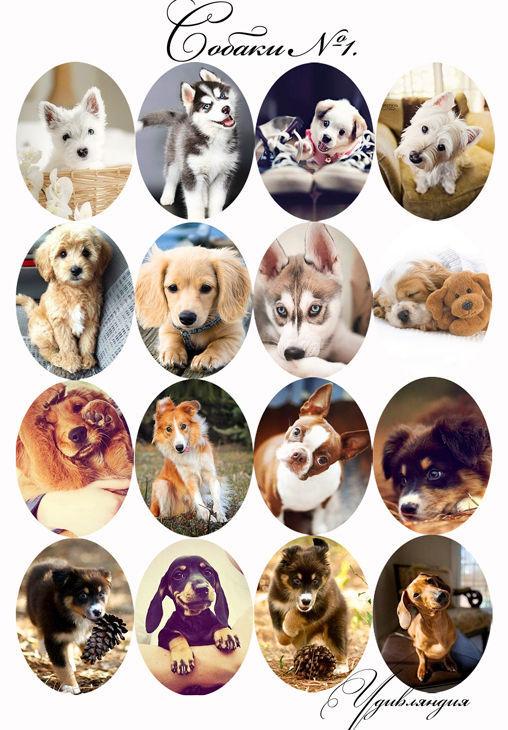 Для украшений ручной работы. Ярмарка Мастеров - ручная работа. Купить Кабошоны и картинки для кабошонов «Собаки» с фотопечатью №42.. Handmade.