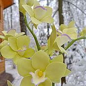 Цветы и флористика ручной работы. Ярмарка Мастеров - ручная работа Орхидеи на ветке. Handmade.