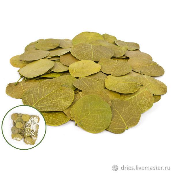 Материалы:  лист монетка зелёный, , Москва, Фото №1