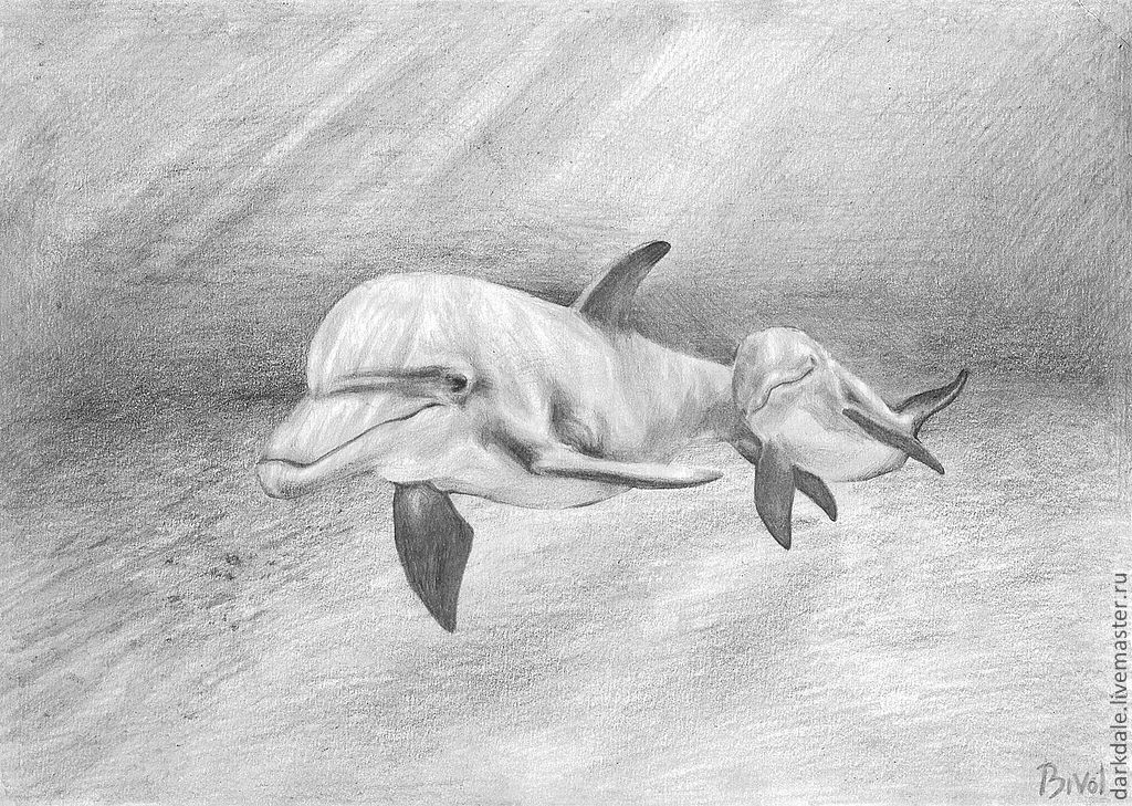 Картинки нарисованных карандашом дельфинов