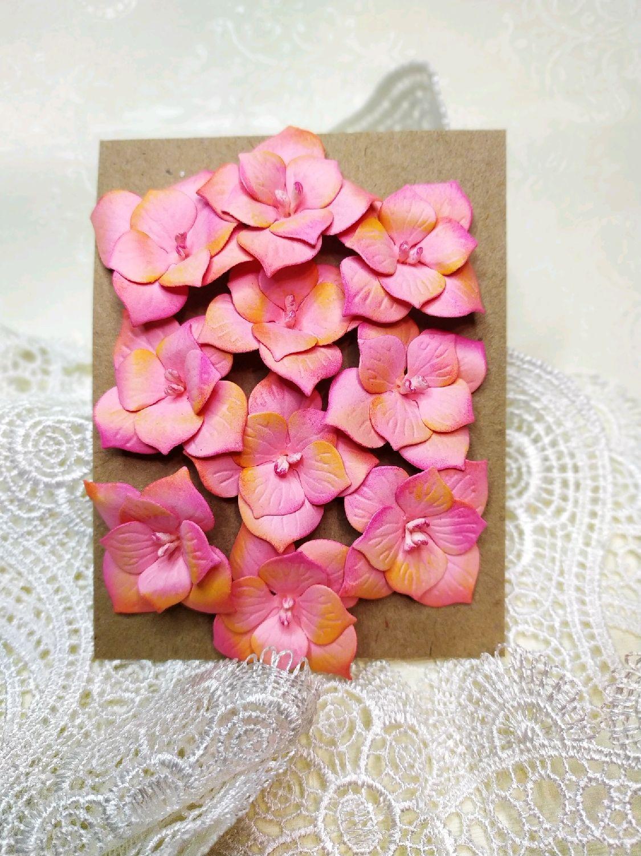 Гортензия розовая, Бумага, Москва,  Фото №1