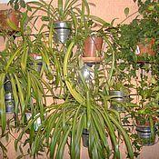 Ампельные и вьющиеся растения для дома, список и фото