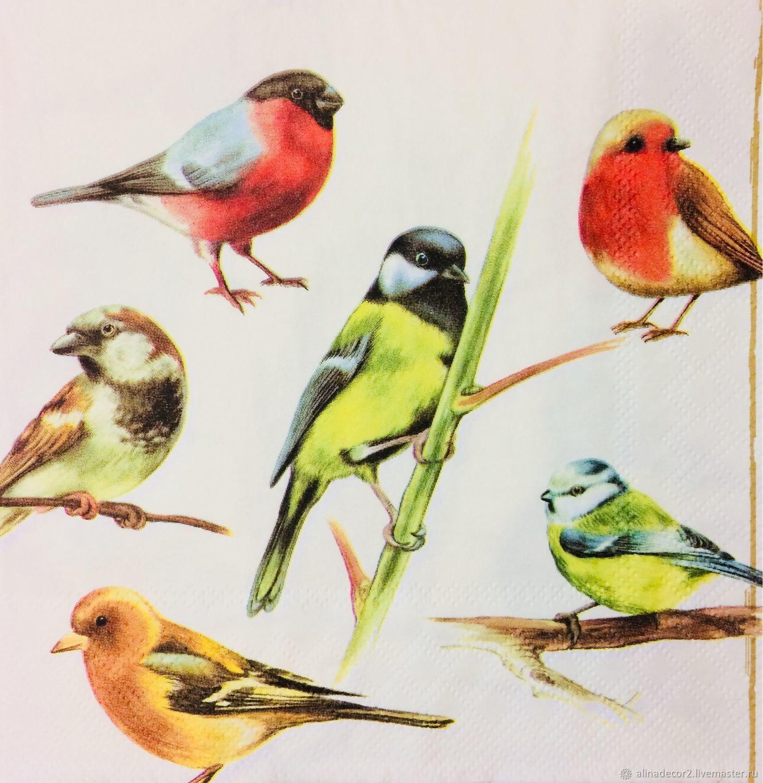 внешнему коллекция картинок птиц порвоо действительно входит