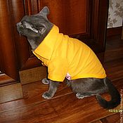 Для домашних животных, ручной работы. Ярмарка Мастеров - ручная работа Одежда для Собаки или Кошки. Handmade.