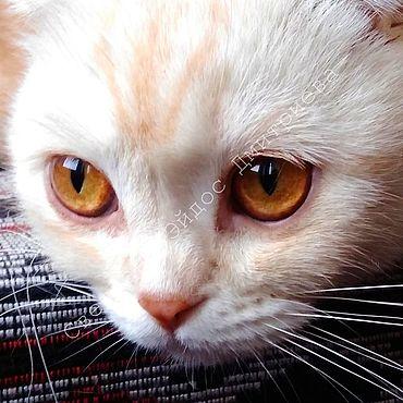 Картины и панно ручной работы. Ярмарка Мастеров - ручная работа Фотокартины: Фон, обои, картина Белая кошка. Handmade.