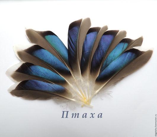 Другие виды рукоделия ручной работы. Ярмарка Мастеров - ручная работа. Купить Перья утки синие 10-13 см. Handmade.