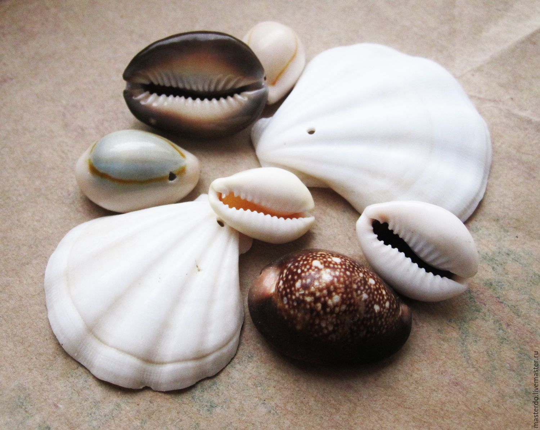 символом таких виды морских раковин с фото что конкурсе