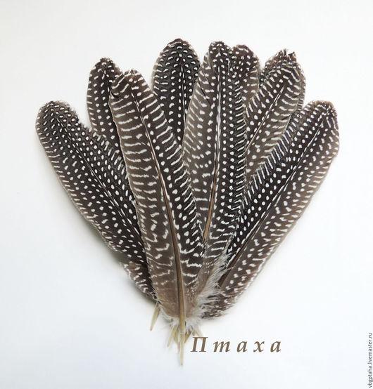 Другие виды рукоделия ручной работы. Ярмарка Мастеров - ручная работа. Купить Перья цесарки крупные. Handmade. Чёрно-белый