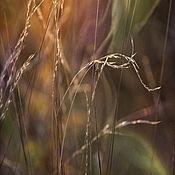 Картины и панно ручной работы. Ярмарка Мастеров - ручная работа Фотокартина для интерьера, картина в подарок «На закате». Handmade.