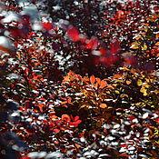 """Картины и панно ручной работы. Ярмарка Мастеров - ручная работа """"Осенние кораллы"""". Handmade."""