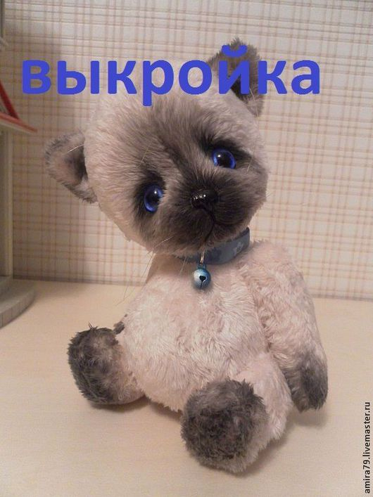 Симский котенок. На фото Китька синеглазый.