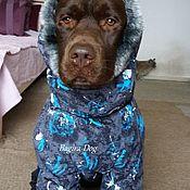 Для домашних животных, handmade. Livemaster - original item Winter jacket for Labrador. Handmade.