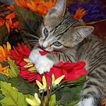 Soft-Kitty-Shop - Ярмарка Мастеров - ручная работа, handmade