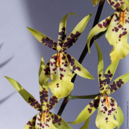 Цветы ручной работы. Ярмарка Мастеров - ручная работа. Купить желтая орхидея брассия. композиция из флористической полимерной глины. Handmade.