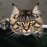 Алексей (El Gato) - Ярмарка Мастеров - ручная работа, handmade