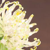 handmade. Livemaster - original item Stained glass brooch in silver Chinese chrysanthemum, Rita Briali. Handmade.