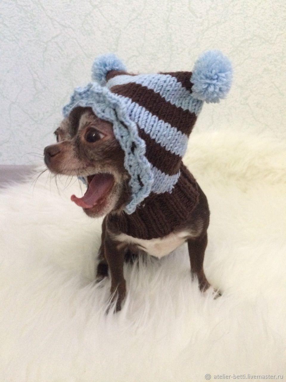 Одежда для питомцев: Капор полосатый, Одежда для собак, Санкт-Петербург, Фото №1