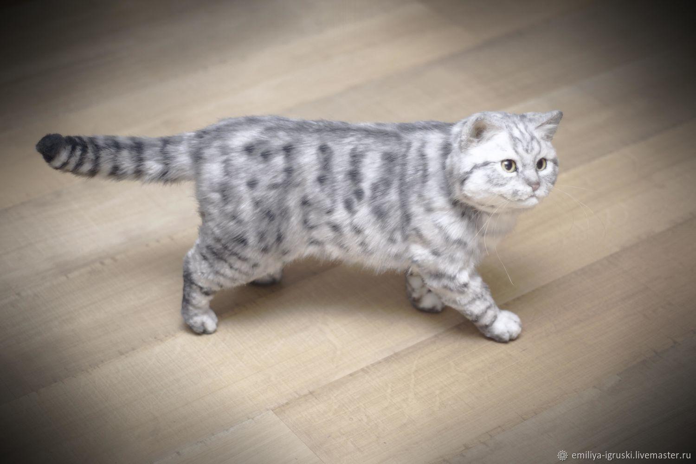 Серебристо полосатая британская кошка. Реалистичная игрушка, Мягкие игрушки, Тюмень,  Фото №1