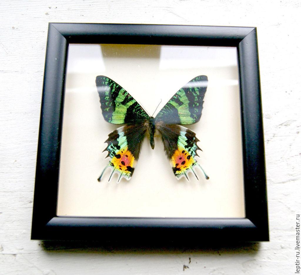 Как сделать рамку для бабочек