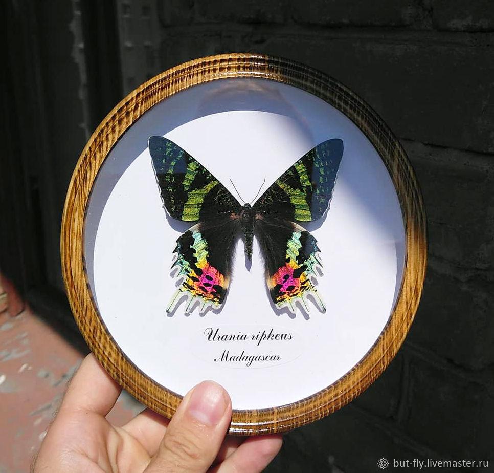 Яркая тропическая бабочка в круглой рамке, Сувениры с пожеланиями, Москва,  Фото №1