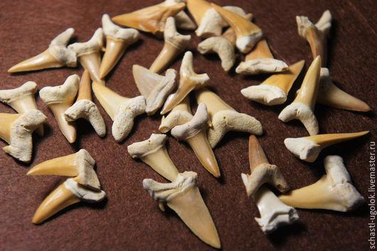 Для украшений ручной работы. Ярмарка Мастеров - ручная работа. Купить Акульи зубы 4 (небольшие дефекты). Handmade. Зуб