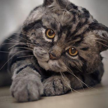 Куклы и игрушки ручной работы. Ярмарка Мастеров - ручная работа Британская мраморная  кошка в стиле тедди натюр. Handmade.