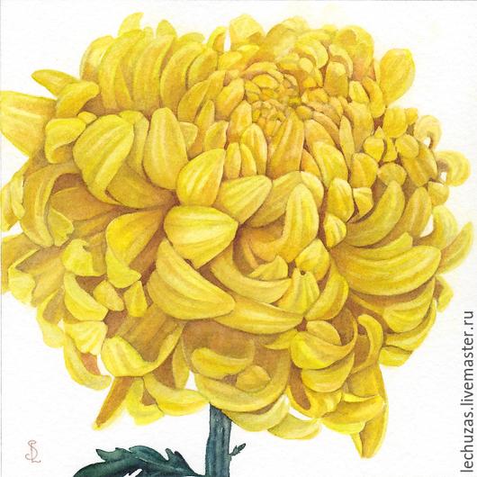 Желтая хризантема. Серия Хризантемы. Рис.5, акварель, размер 17см*17см, бумага Canson 100% хлопок 300 г/м2, Светлана Маркина, LechuzaS