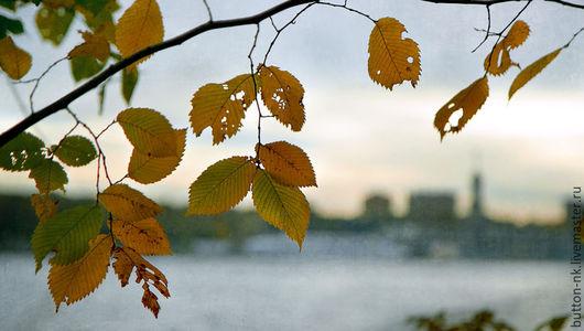 Фотокартины ручной работы. Ярмарка Мастеров - ручная работа. Купить Фотокартина Осень в городе. Handmade. Желтый, салатовый, голубой, серый