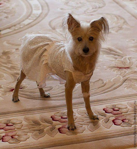 """Одежда для собак, ручной работы. Ярмарка Мастеров - ручная работа. Купить Платье для собаки """" Подружка невесты"""" + заколка+ 4 подвязки. Handmade."""