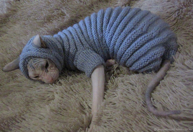 что вязаная одежда для кошек фото наши дни