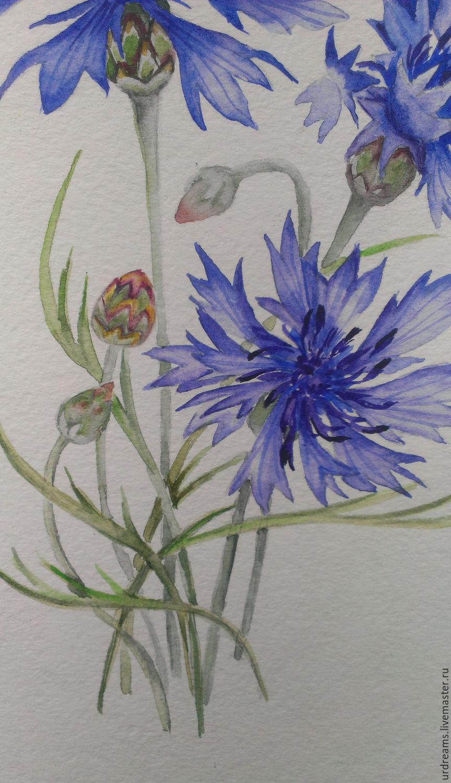 Васильки садовые фото цветов - bde