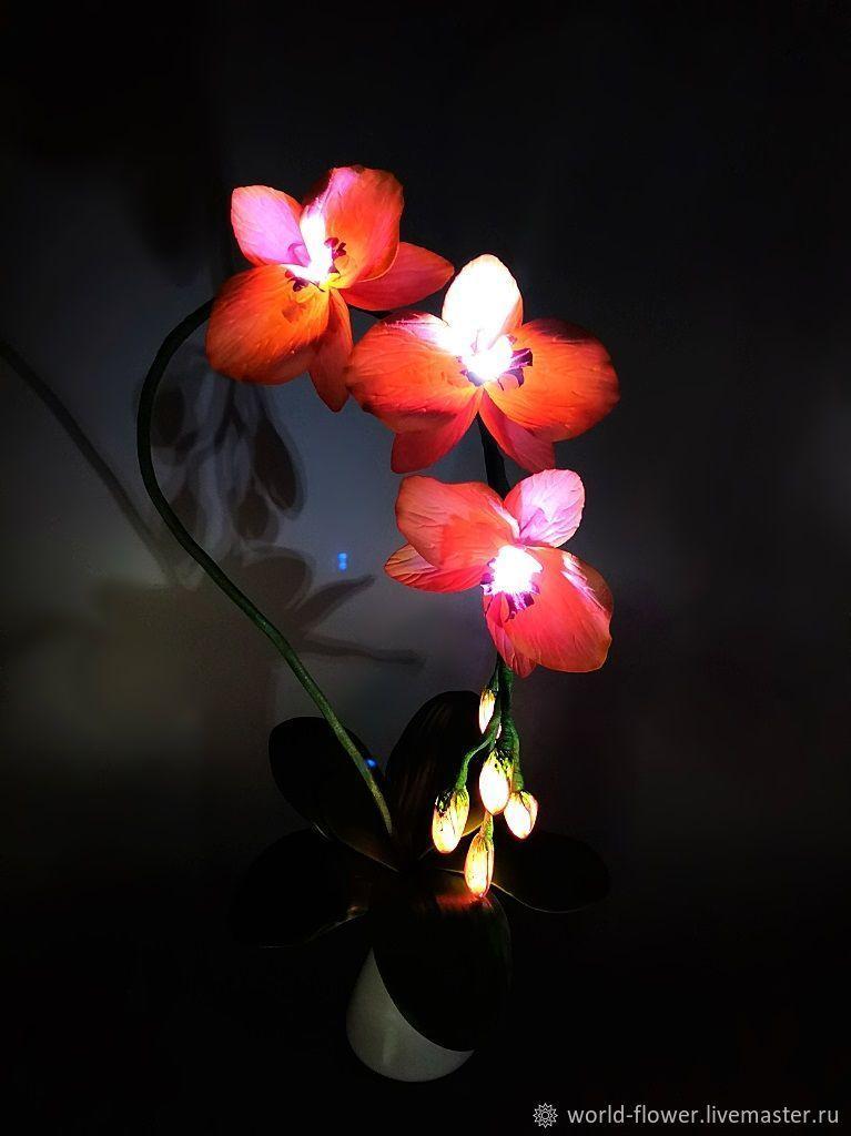 Flower-light peach 'Orchid Phalaenopsis', Nightlights, Surgut,  Фото №1