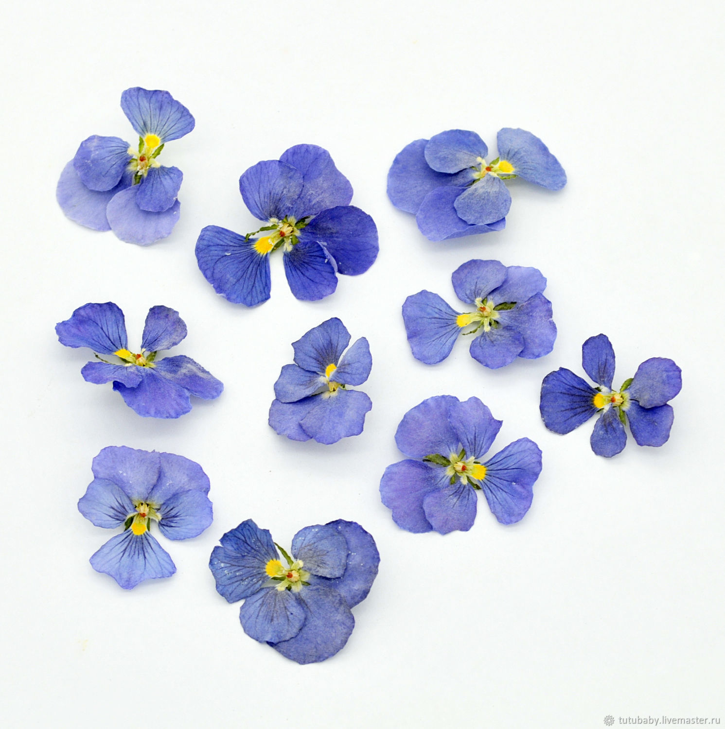 Viola, volume drying, shades of blue, collection 2020g, The dried flowers, Buzuluk,  Фото №1