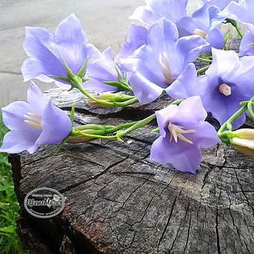 Цветы и флористика ручной работы. Ярмарка Мастеров - ручная работа Колокольчик голубой  из полимерной глины. Handmade.