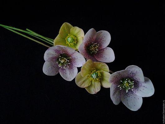 Морозник, морозник из полимерной глины, керамическая флористика, цветы ручной работы,Рождественская роза.