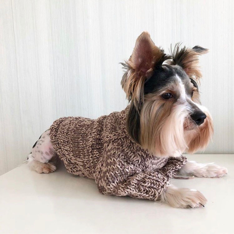 Свитер, Одежда для собак, Санкт-Петербург, Фото №1