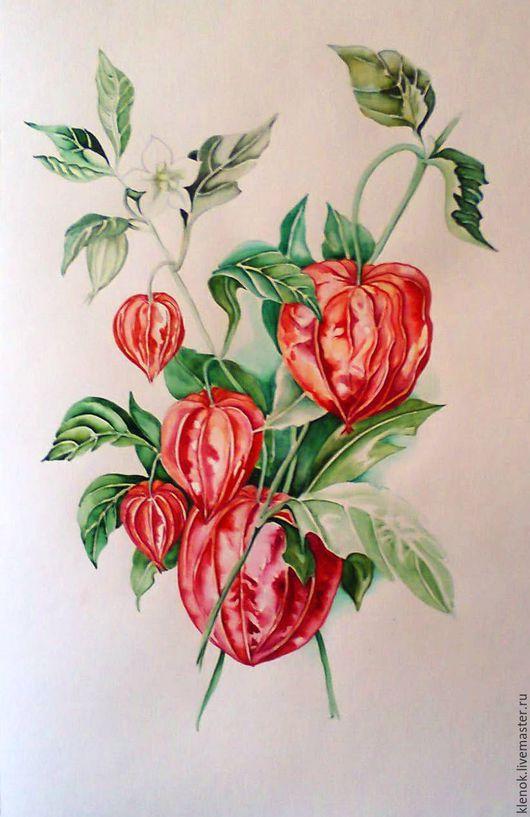 Картины цветов ручной работы. Ярмарка Мастеров - ручная работа. Купить Ботаническая акварель. Handmade. Ярко-красный, ботанический рисунок