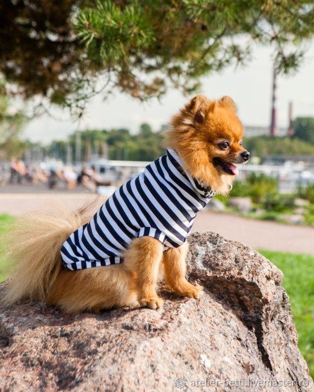 Одежда для питомцев: Морячок, Одежда для собак, Санкт-Петербург, Фото №1